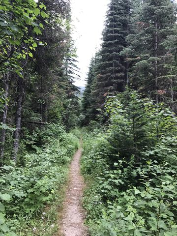 The first mile follows an overgrown logging road