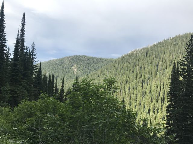 View back into the Myrtle Creek valley