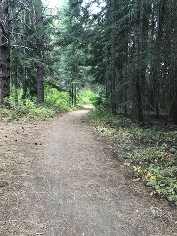 Most of the trail is a wide single-track