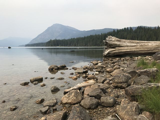 A huge tree rotting away on the shore of Lake Wenatchee