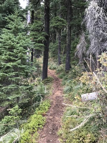 Much of the trail is a well-maintained packed-dirt single-track