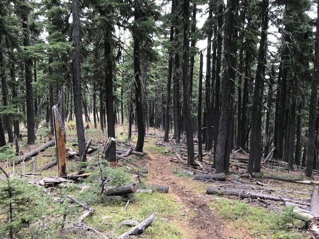 The saddle past Little Sentinel Peak