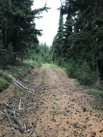 The old access road to the Pond Peak lookout