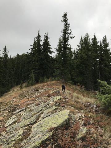 Knife-edge ridge along the southern part of Downey ridge on approach to Guard Peak