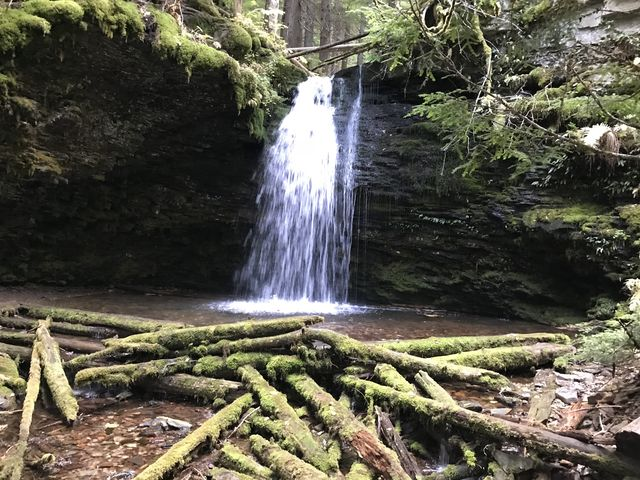 Shadow Falls cascading into a pool surrounded by moss-covered timber