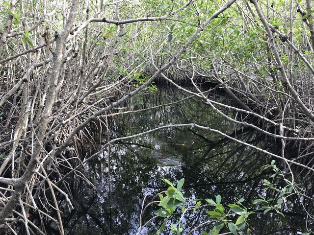 Tidal creek