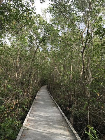 Getting tired of mangroves yet?