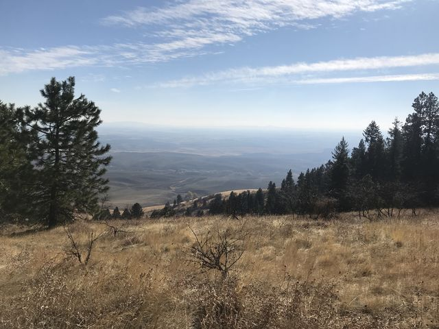 Meadows descending the eastern slope of Pine Ridge