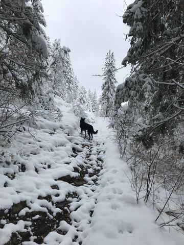 Trail #117 near the trailhead