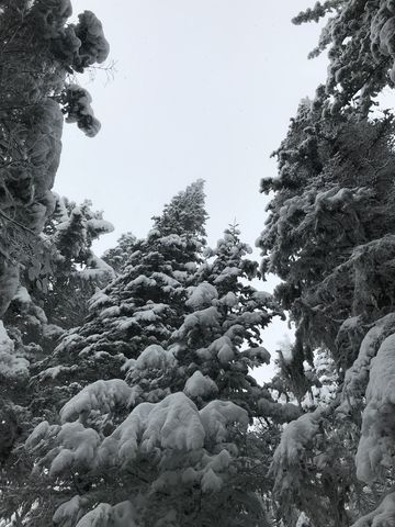 Snow-covered trees near the top