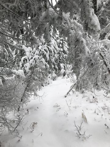 Virgin snow along the ridgetop