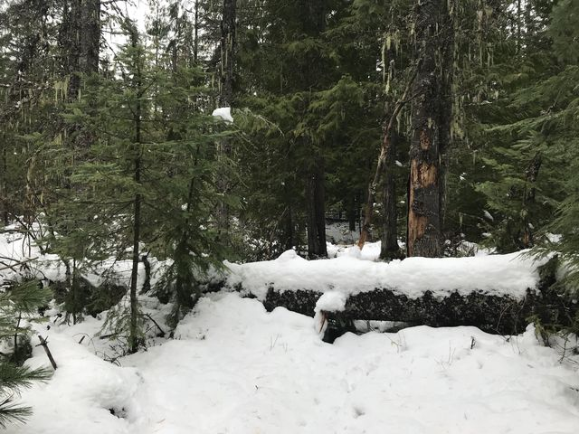 A few downed trees on the ascent to Lakeview Mountain