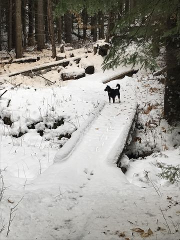 A couple bridges make life easy on trail #269 (Lakeview Mountain)