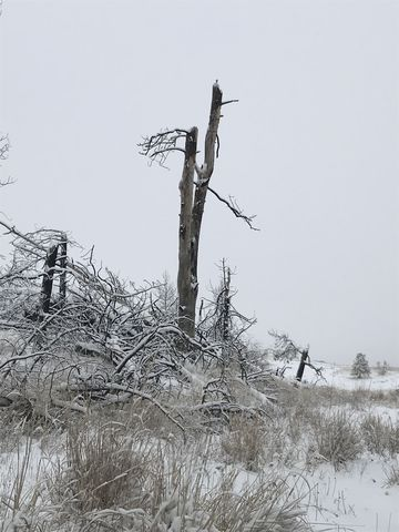 Dead trees dot the landscape