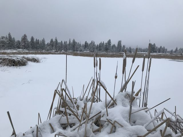 Cattails on the edge of Blackhorse Lake
