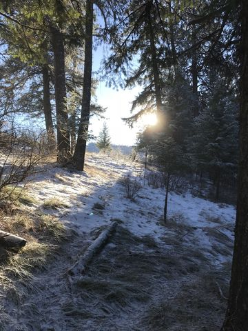 The sun lighting up a hillside meadow
