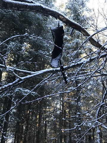 A marten who committed suicide. No, just a piece of bark….