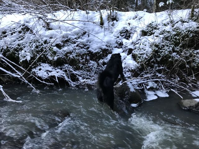 This creek crossing was the trickiest. Naughty waded right through and the Scribe found…