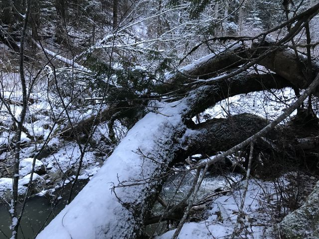 …these logs a bit upstream