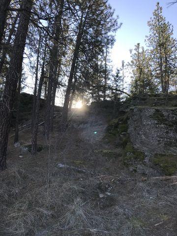 Sun poking over a ridge near the Pond Loop trail