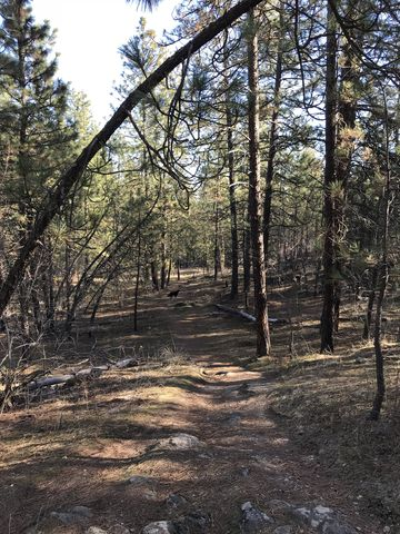 Much of the trail leads through woods. This is along the Goldback Loop Trail