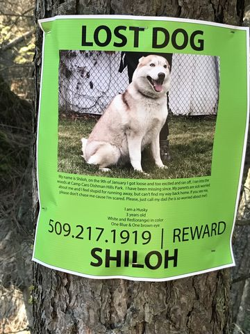 Lets hope he was found! We didnt see any dogs…