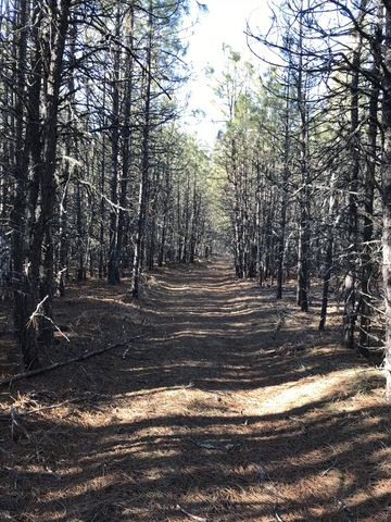 The return trail moves through thick stands of pine saplings