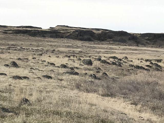 Boulder-strewn meadows abound