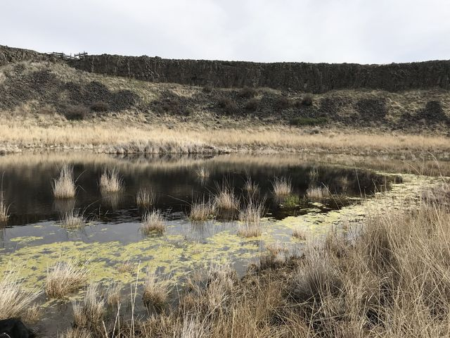 As the trail winds through multiple coulees, you come across many small ponds, frogs announcing each from afar