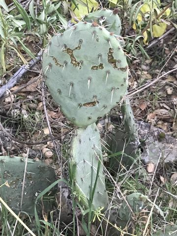 Youll frequently come across cacti along the trail