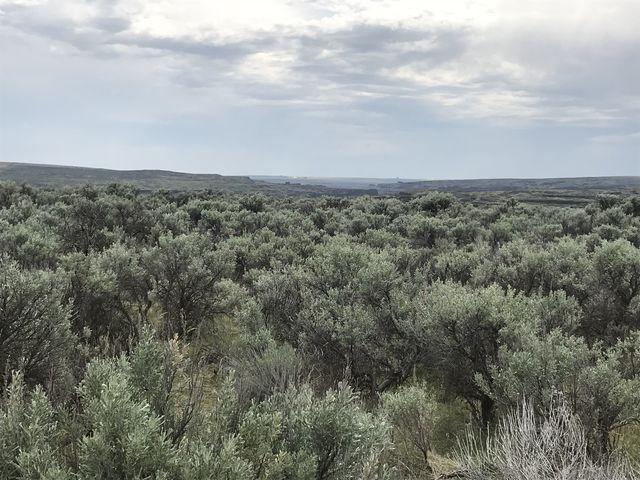 Sagebrush desert on the OHV trail