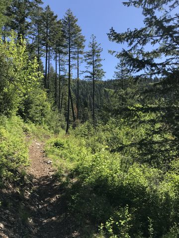 The trail crosses a burnt area about 1 mile in. Great views along this stretch