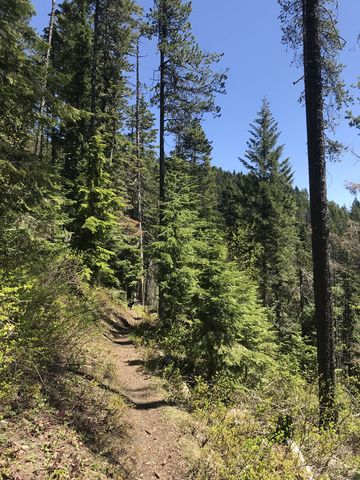 Nicholas Ridge trail along the southern flank of Badger Mountain