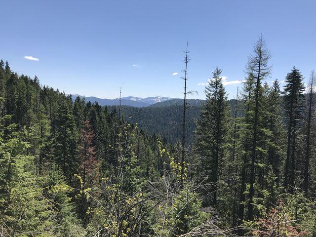View east from Nicholas Ridge