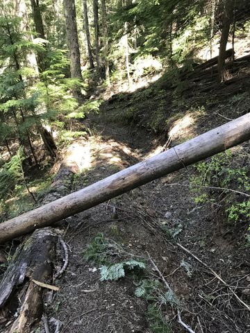 Youll encounter many downed logs on the lower Hells Canyon trail