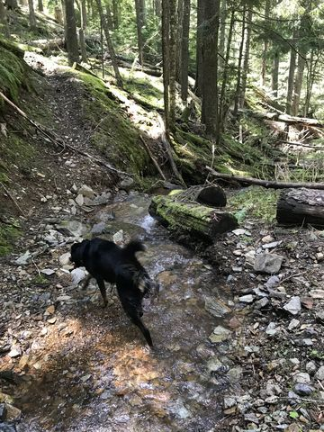 The lower trail crisscrosses Hells Creek