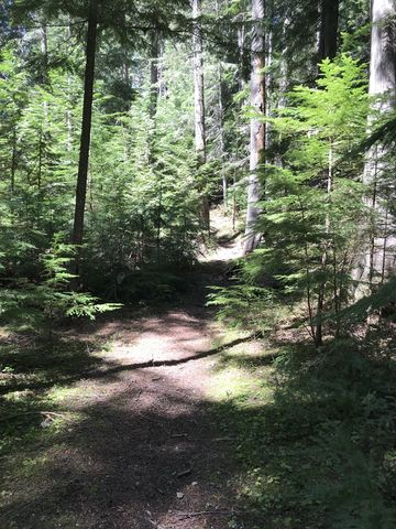 The lower trail is pleasant in the stretches that are cleared