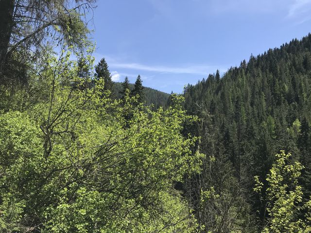 The views along the lower trail are limited