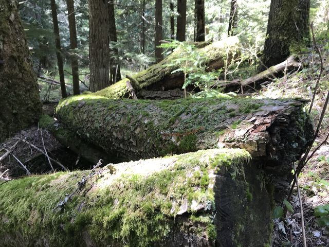 Moss-covered logs