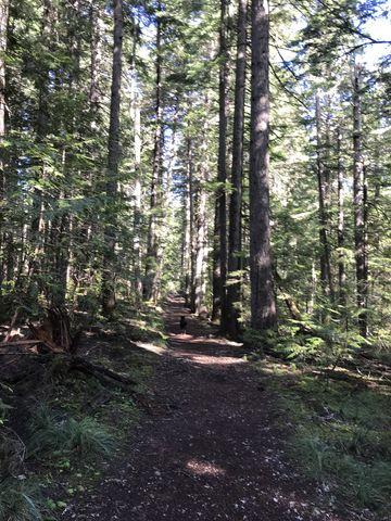 Trail near trailhead