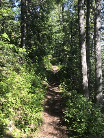 Navigation trail