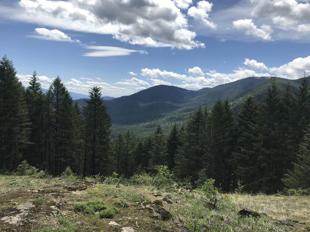Views of the interior (Blacktail Mountain)