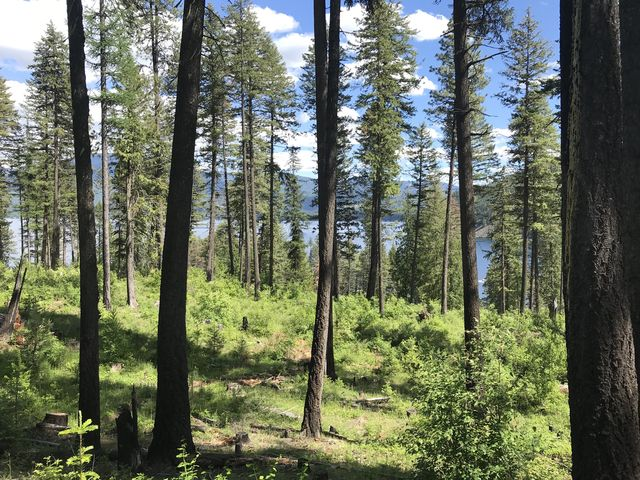 Views of the lake from the Woodrat trail are very limited