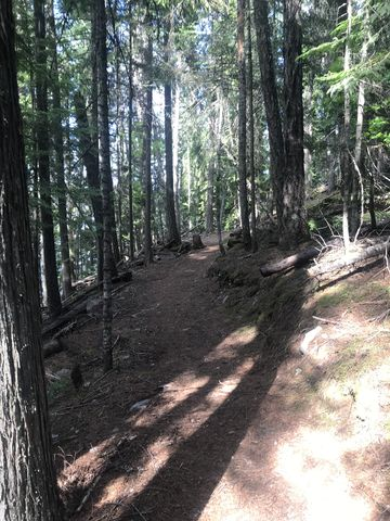 For a short distance the Beach Trail leads through the forest on the western side of the forest road