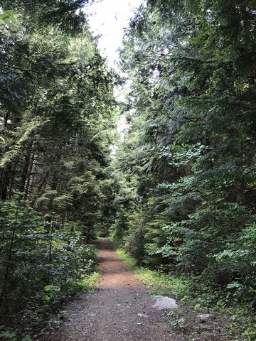 Trail 121 starts out on an old forest road
