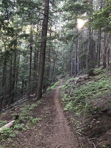 Soon 121 turns into a singletrack ascending Linder Ridge