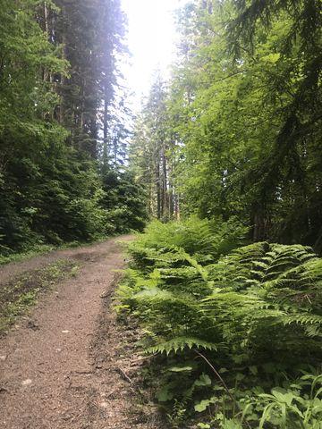 Trail 130 along the back (nothwest side) of Mount Spokane. Its still an old fire road