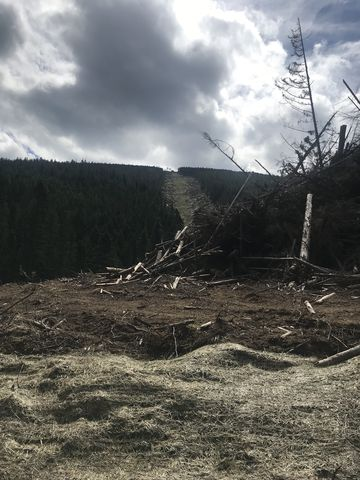 Clearcuts where new ski runs are being put in