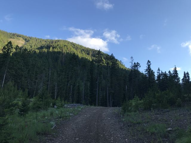 Trail near trailhead. It starts on an old logging road