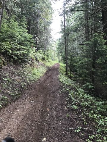 Trail 251 is relatively flat as it parallels Gold Center Creek